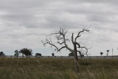 Canberra pics 021.jpg